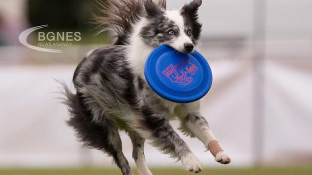 Ново изследване определи Бордър коли за най-интелигентното куче
