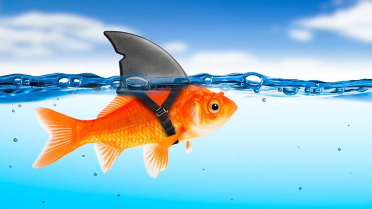 Минесота, златните рибки и неприятните последствия от засилената им популация