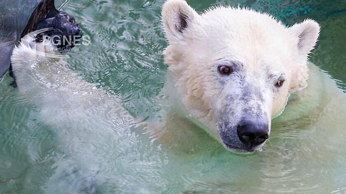 Най-едрите породи мечки в света