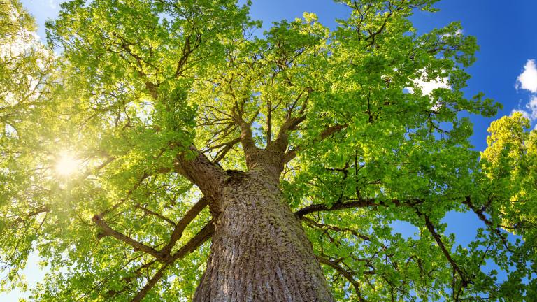 Дърветата в градски условия: Каква е разликата от наличието дори само на едно дърво