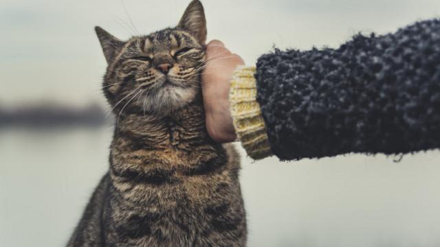 Как да сме сигурни, че домашната котка е щастлива