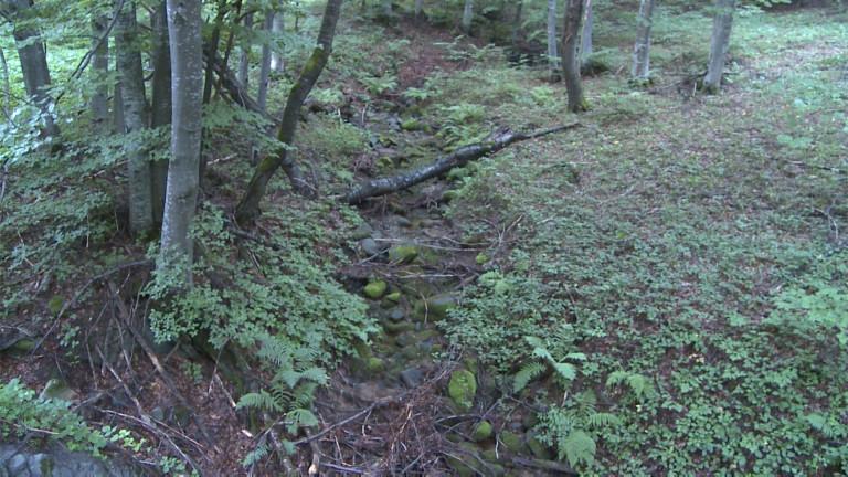 България е лидер по защитата на вековни гори в цяла Европа