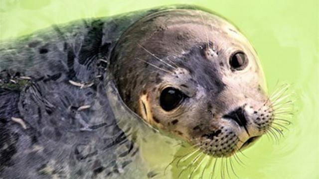 Убиха тюлен-талисман на гръцки остров