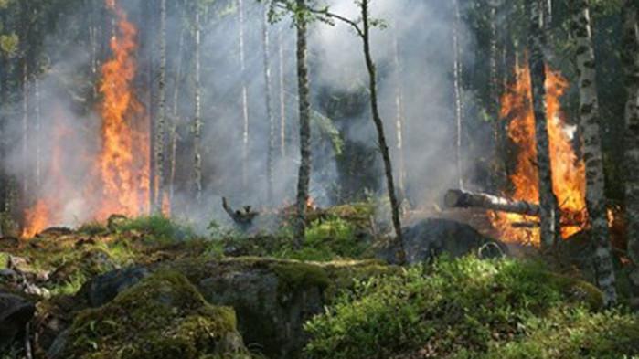 ЕС изпраща в Сардиния четири самолета за борба с пожари