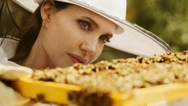 Анджелина Джоли стана кръстница на програмата за опазване на пчелите