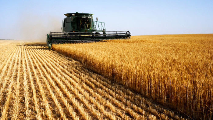Четири пъти по–малък е добивът на пшеница тази година