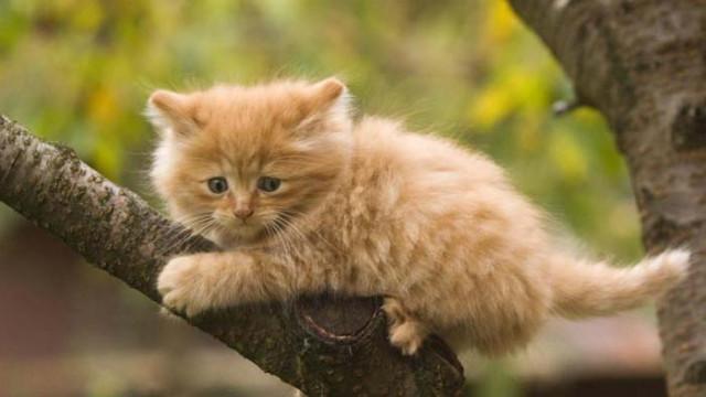 16 котки, които струват цяло състояние