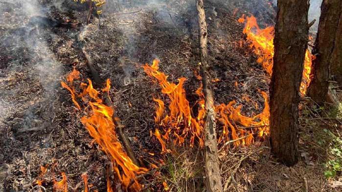 От началото на юни горските служители са реагирали на повече от 130 сигнала за пожари