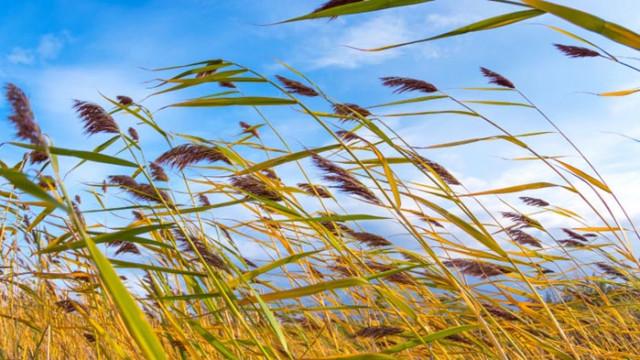 Жълт код за силен вятър в неделя
