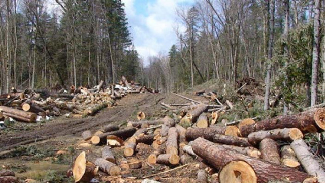 Заловиха собственик на цех, маркирал дърва с преотстъпена общинска марка