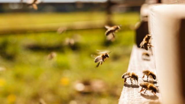 70% от пчелите в Тервелско - натровени със забранени препарати