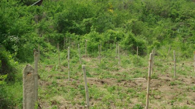 Задържаха шестима дилъри, отглеждали 114 растения марихуана във Враца
