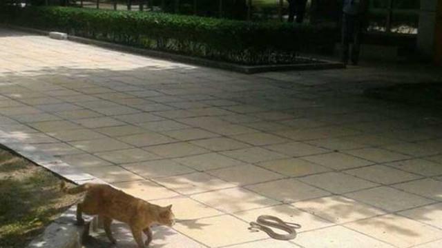 Във Варна може да потърсите специалист по залавяне на влечуги, ако ги видите на обществени места