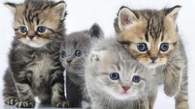 Елитни котки от цял свят са на изложба във Варна