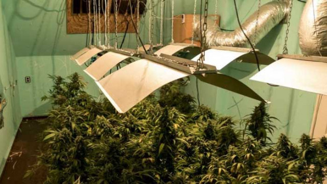 34-годишен ще лежи година в затвор, заради отглеждане на марихуана