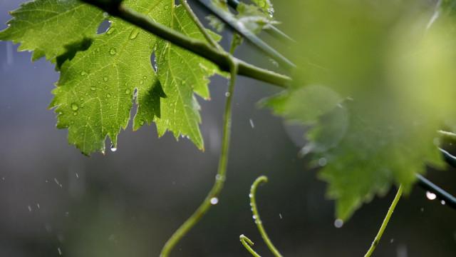 Поройни дъждове удариха Северозапада