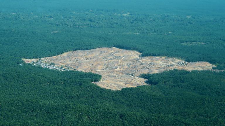 Загубата на местообитания предизвиква каскада от увреждане на екосистемата