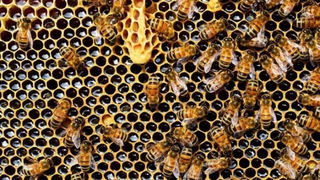 Кредити за над 500 000 лева получиха пчеларите