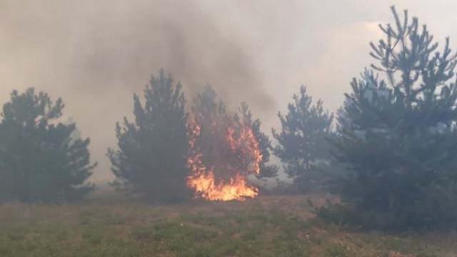 Пожарът край Свиленград върви към границата