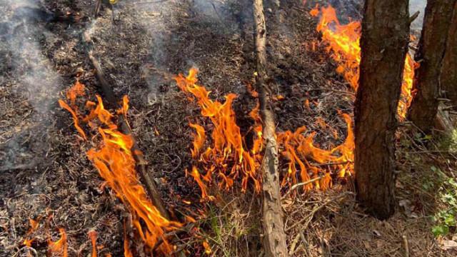 Стотици горски служители са на първа линия в борбата с огнената стихия