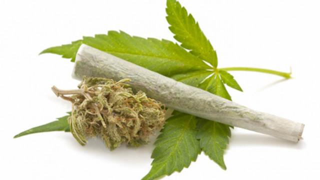 Арестуваха двама обвиняеми за отглеждане на марихуана и производство на наркотици