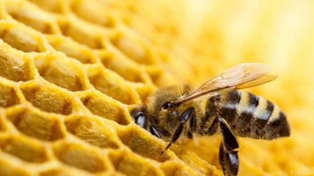 Масов мор на пчели и слаба медоносна година отчитат пчелари