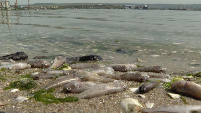 Измирането на риба във Варненското езеро не може да се обвързва пряко с дефектиралия тръбопровод