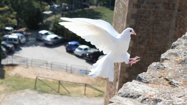 Какво означава гълъб на перваза на прозореца